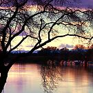 River Evenings by Barbara  Brown