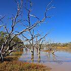 Morning Reflections at Buckinbah # 2 by Penny Smith