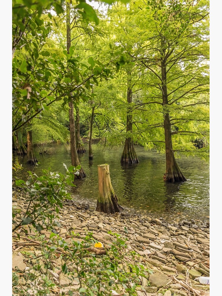 Trees in the water by tdphotogifts