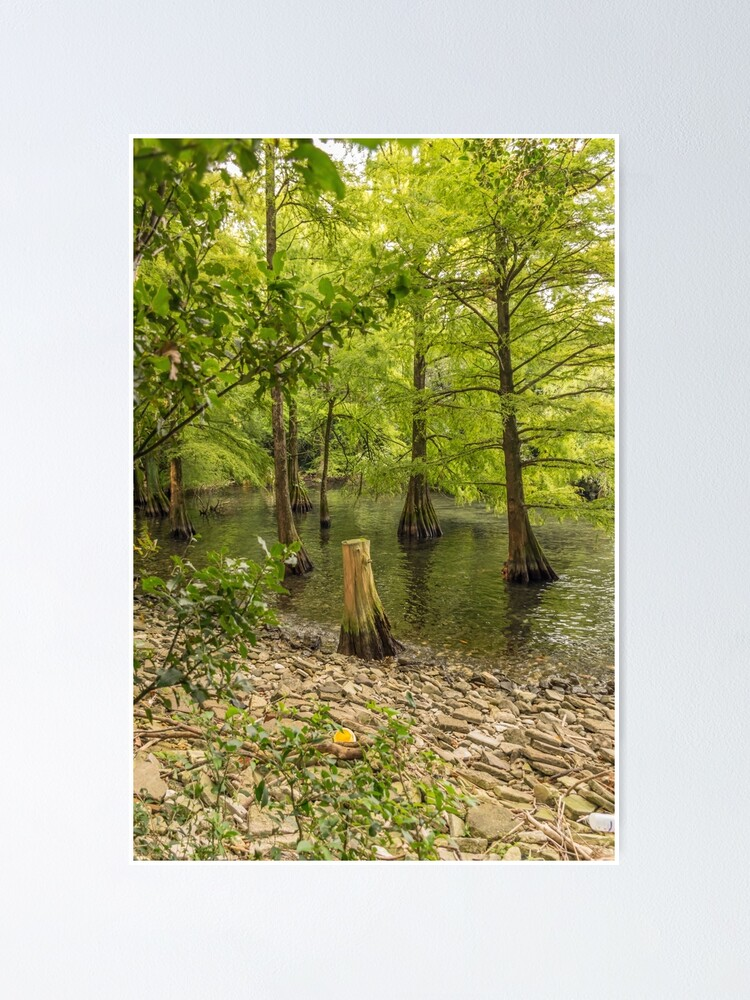 Alternate view of Trees in the water Poster
