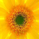 Staring At The Sun II by Didi Bingham