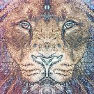 SEASON OF THE LION by BOLLA67
