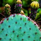 Cacti and Friends by Jessica Manelis