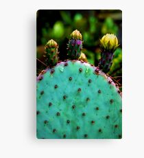 Cacti and Friends Canvas Print