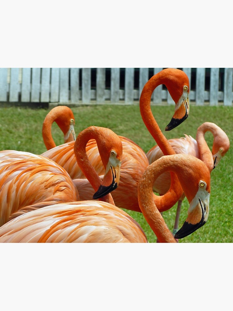Colorful flamingos by tdphotogifts