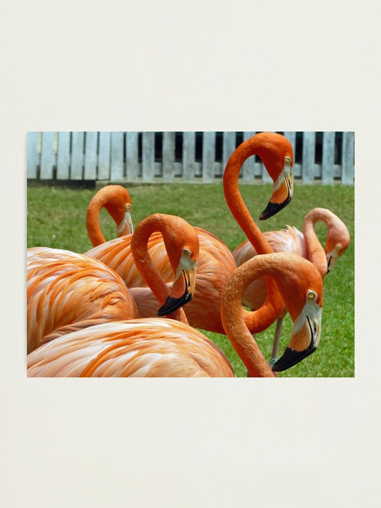 Alternate view of Colorful flamingos Photographic Print