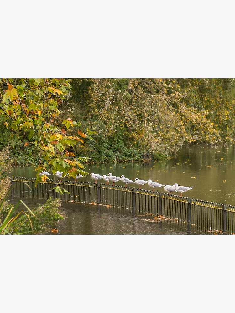 Seagulls on railings by tdphotogifts