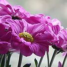 Just a Pink Flower by jamluc