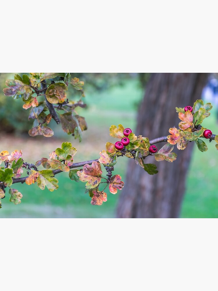 Red berries on a tree branch  by tdphotogifts