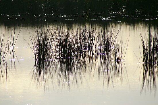 Reeds by Kathryn Potempski