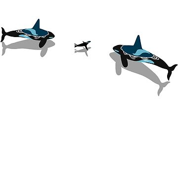 Killer whale hunting seals by albertocubatas