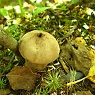 Canadian Puffball by Tonee Christo