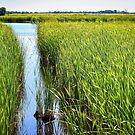 """""""Wetlands"""" by Colette  Larson"""
