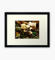 Fungi Function Framed Print