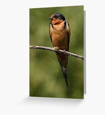 Barn Swallow Resting on a Branch Greeting Card