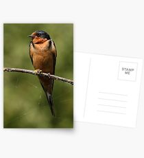 Barn Swallow Resting on a Branch Postcards