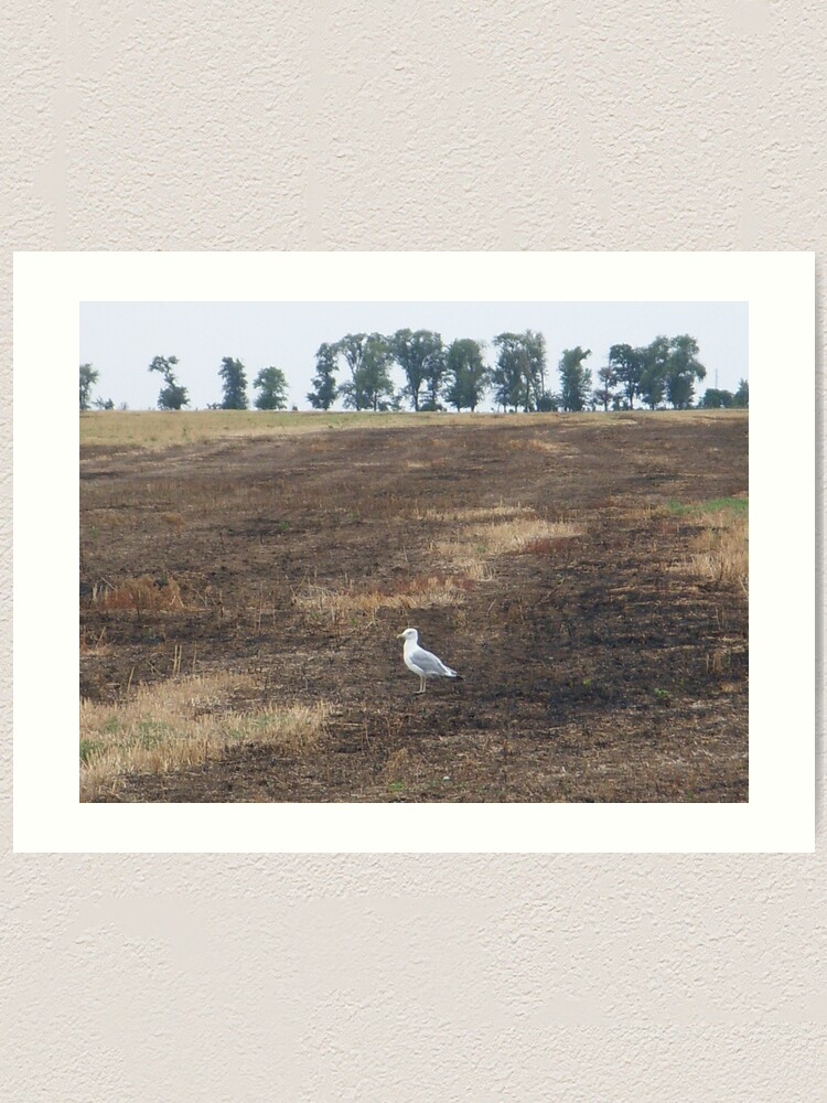 Alternate view of What are you doing in the middle of the field, seagull? - I could ask you the same thing! Art Print