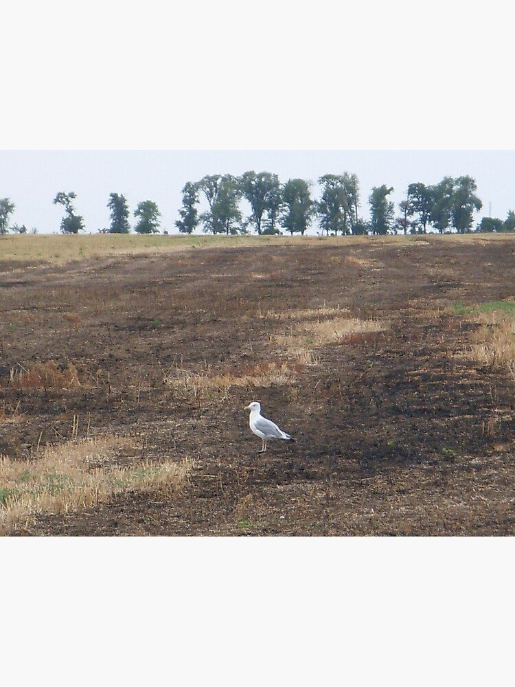 What are you doing in the middle of the field, seagull? - I could ask you the same thing! by Anthropolog
