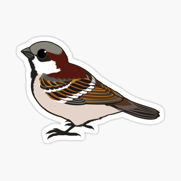 Cute little Sparrow Sticker