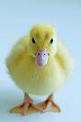 Duckling by Extraordinary Light
