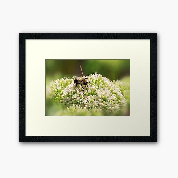 Busy Little Bee Framed Art Print