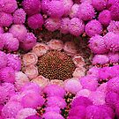 Pinks by Varcoe