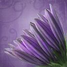 Purple Daisy, Watercolor by Myillusions