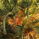 Palm Jungle by Ellen Cotton