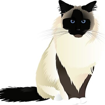 Birman cat breed by Marishkayu