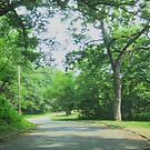 Patchwork Trees In Squares by Linda Miller Gesualdo