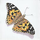 Painted Lady Butterfly by FranEvans