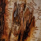 TreeBark Collection Abstract Collection #A2 by Philip Johnson