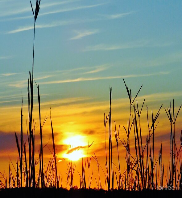 Sweet Marsh Sunset  by lorilee