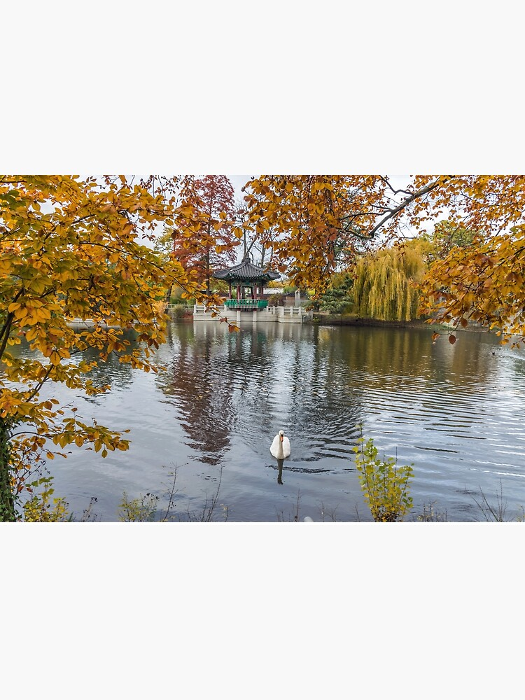 Swan on a pond in autumn by tdphotogifts