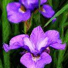 Impressionistic Iris by rdotter