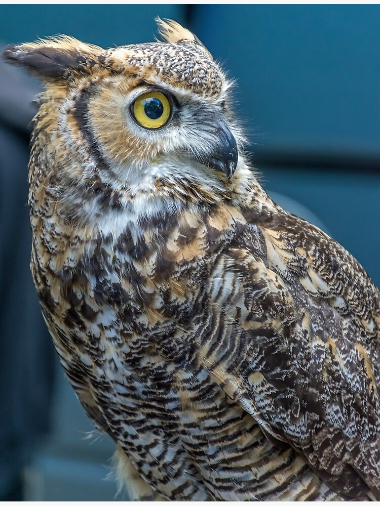 Owl up close by tdphotogifts