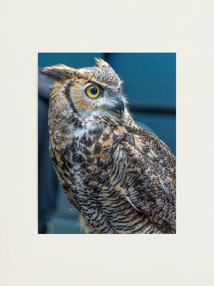 Alternate view of Owl up close Photographic Print