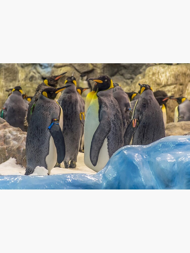 Cute penguins by tdphotogifts