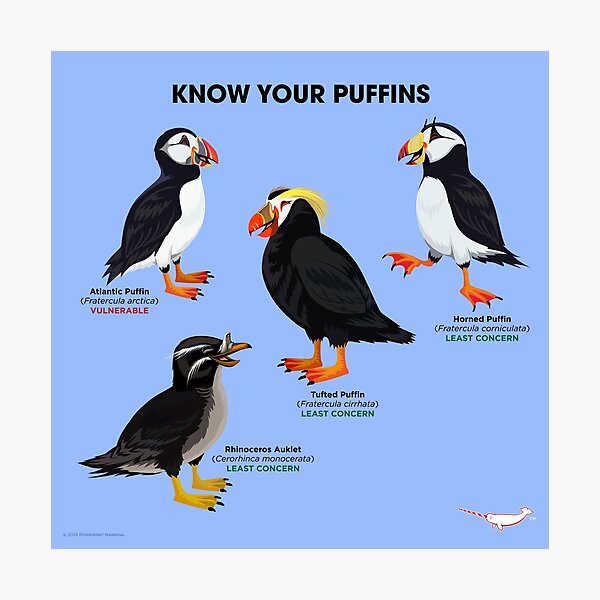 Know Your Puffins Photographic Print
