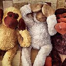 The Three Wise Monkey's ! ... by SNAPPYDAVE