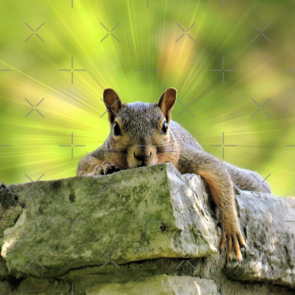 Relaxed Squirrel by FrankieCat