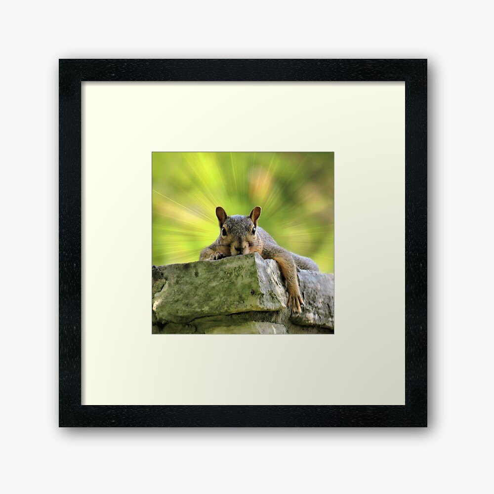 Relaxed Squirrel Framed Art Print