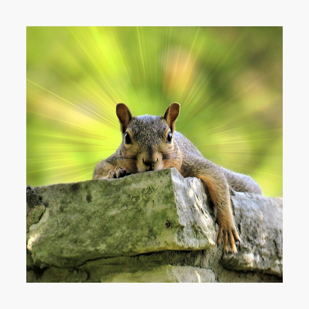 Relaxed Squirrel Photographic Print