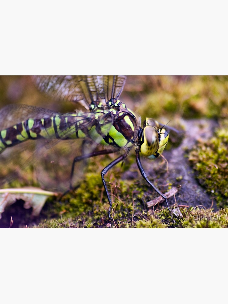 Dragonfly by christait
