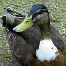Duckie Duck by ienemien