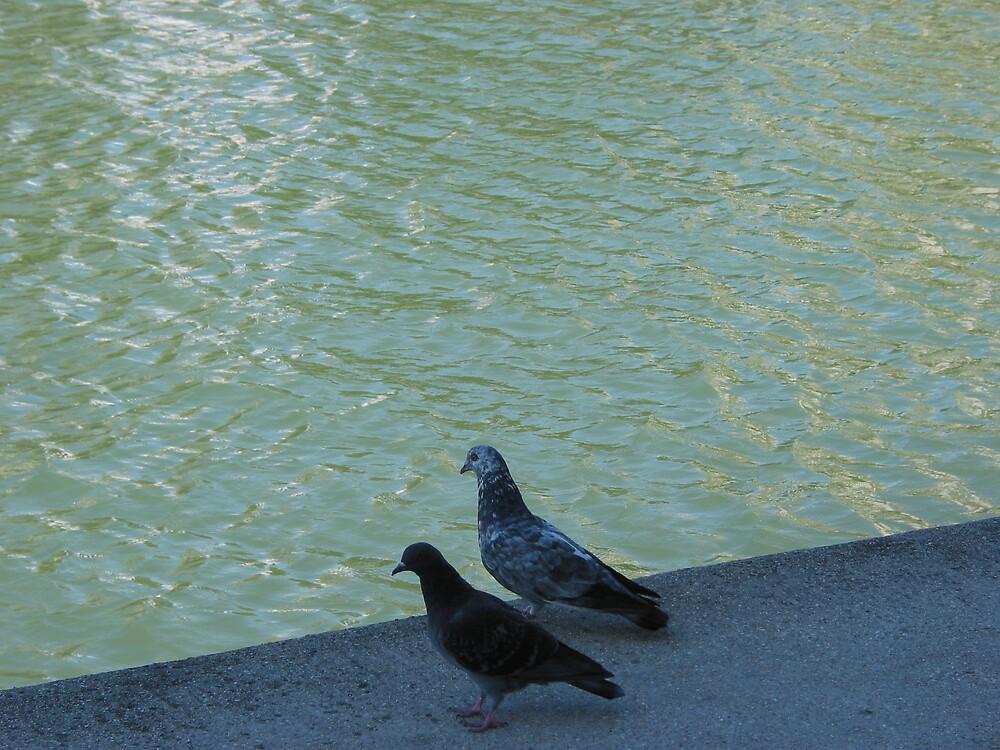 Parisian pigeons, Quai de la Marne by jalb