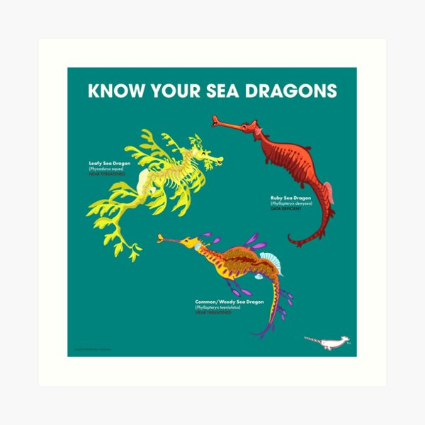 Know Your Sea Dragons Art Print