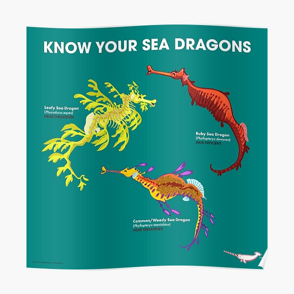 Know Your Sea Dragons Poster