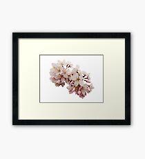 Cherry Blossom Festival in Kyoto Framed Print