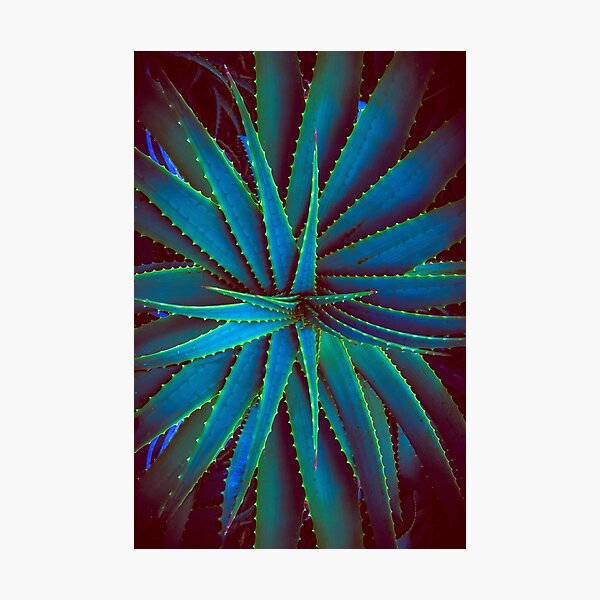 Electric Agave Photographic Print